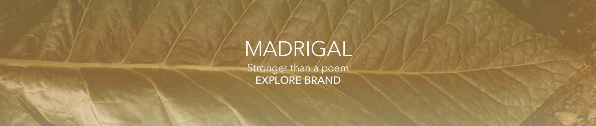 banner-madrigal